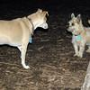 ROSIE & BUDDY (cairn)