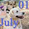 01 july