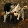 POWDER (pitbull girl), Oliver (pup)