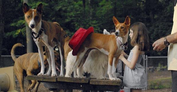 tayda (red hat) 15