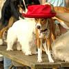 tayda (red hat) 8