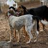 Lulu, Sammy (hounds) JULY2