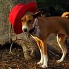 tayda (red hat) 6