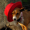 tayda (red hat) 7