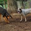 Lulu, Sammy (hounds) (C) JULY2