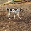 CALI (hound)  6