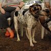 CALI, LULU (hounds)_2