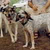 CALI, LULU (hounds)_3