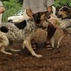 CALI, LULU (hounds)_5