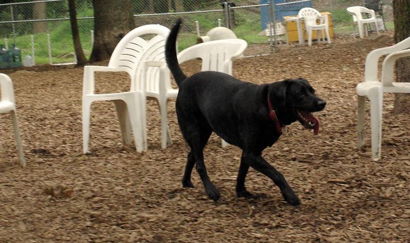 BLAZE (NEW, w  Elvis bulldog)_2