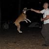 BUBBA (boxer pup)_3
