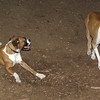 Bubba, Ruby (BOXERS_6