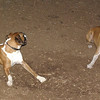 Bubba, Ruby (BOXERS_4