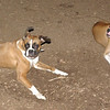 Bubba, Ruby (BOXERS_2