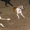 Bubba, Ruby (BOXERS_1