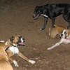 Bubba, Ruby (BOXERS_5