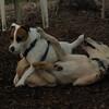 Lucas (collie pup), Eli_1
