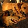 BUFFY, MADDIE ( the girls)_9