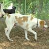 LUCY (NEW, hound )_1