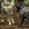 JACK & MIA (sheepdog)_1