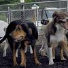 Baxter, Sammy, Maddie_2