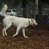 RUDY (white, gretchen)_12