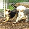 Maddie, EMMA (sheepdog)_4
