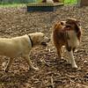 BAXTER, FRASER (puppy)_1