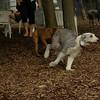 Mia, Emma (Sheepdogs)_3