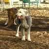 Mia, Emma (Sheepdogs)_5