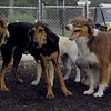Baxter, Sammy, Maddie_1