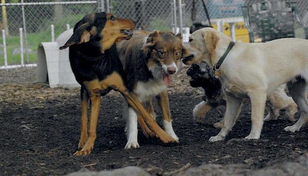Baxter, Sammy, Fraser_1