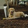 HAZEL (pup)_1