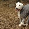 Mia, Emma (Sheepdogs)_2