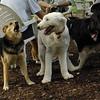 Maddie, EMMA (sheepdog)_2