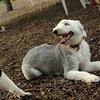 Oliver, EMMA (sheepdog)_3