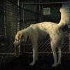 RUDY (white, gretchen)_1