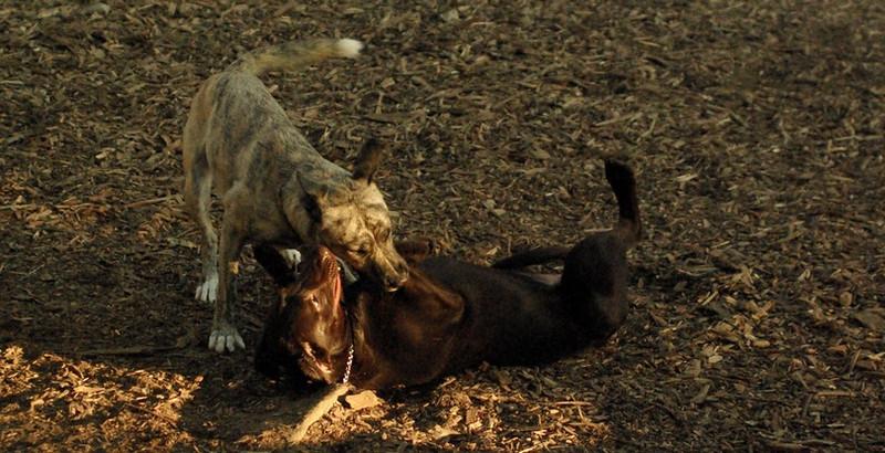 Cleo (puppy), Spencer_1