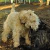 NOLA (pup), Chase_7