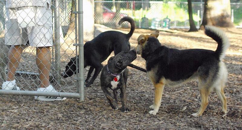 Nola (pup), Maddie, Blackjack_1