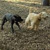 NOLA (pup), Chase_1