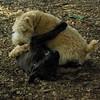 NOLA (pup), Chase_4