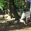 LEXIE (rat terrier)_34