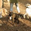 NOLA (puppy)_1