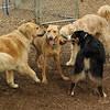 charlie (dingo), oliver, wally, duke_1