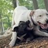 POWDER, Nola (puppy)_1