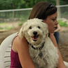 MICKEY (schnoodle)_1