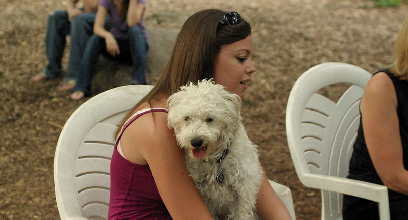 MICKEY (schnoodle)_2