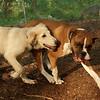 LUCAS, RUBY (pups)_3