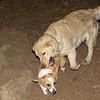 Joey (pup, 1st time), Hazel (pup)_10